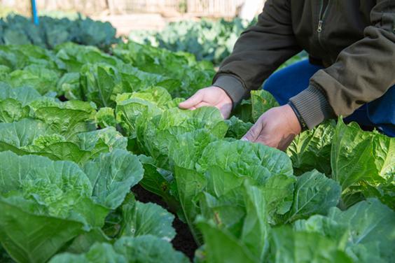 La nouvelle Politique Agricole Commune